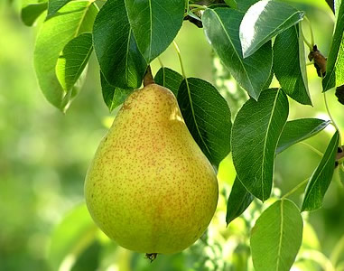 All Your Questions About the Mushy Pear Answered