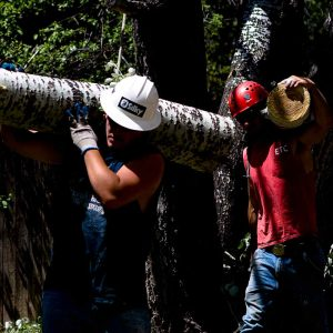 Denver Tree Service Projects