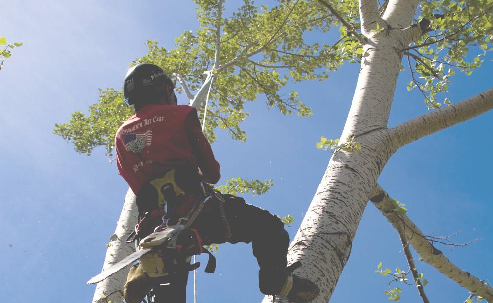 Denver Tree Services Climber