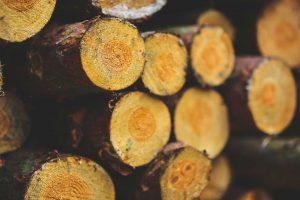 denver tree service firewood