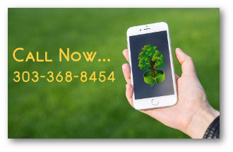 call Environmental Tree Care LLC